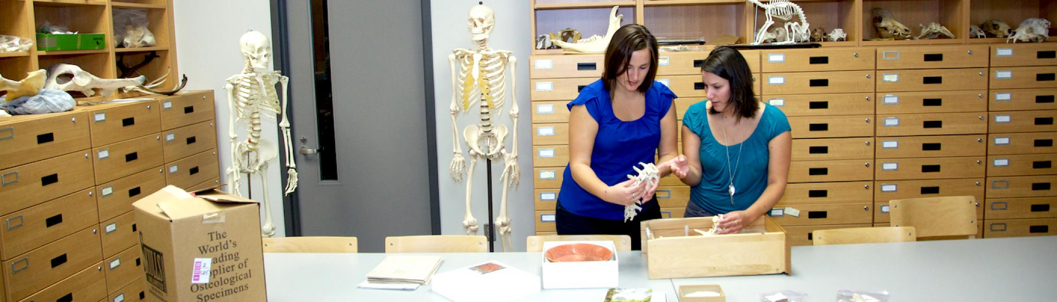 2 girls looking at bones in a cardboard box