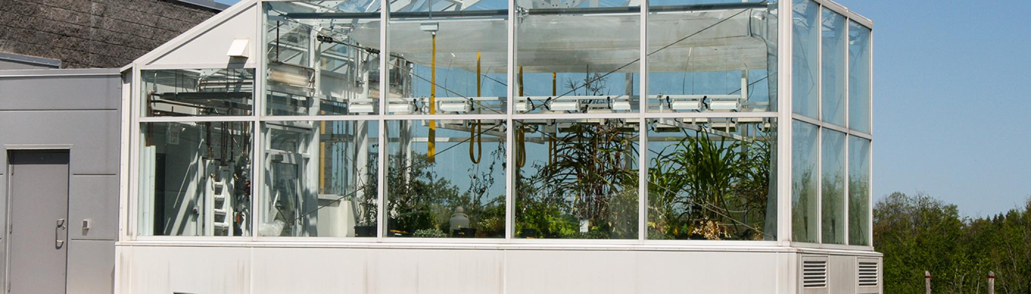 Exterior view of the DNA building greenhouse in the summer sunshine