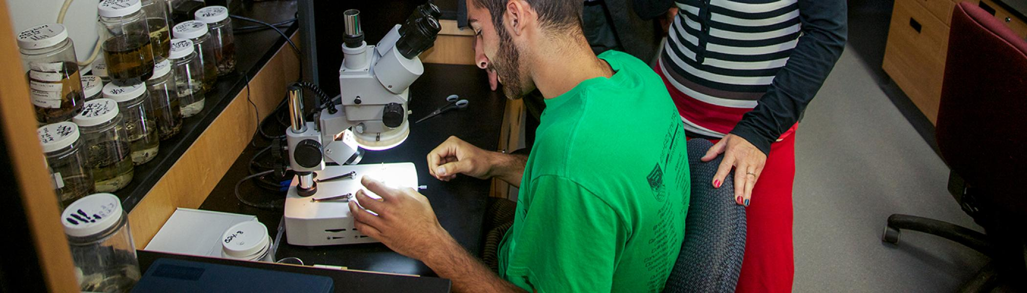 A professor sitting at a microscope in a biology lab looking at a sample in a glass dish