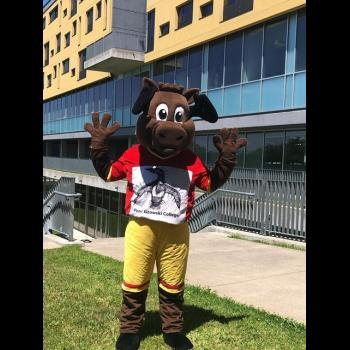 BAMM the moose standing infront of Gzowski College