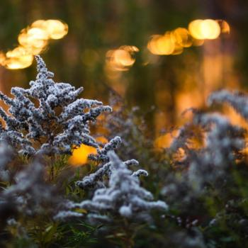 Winter Warmth by Alexis Davis, photo of sumac trees in winter