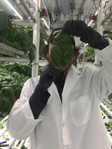 Image of individual holding plant specimen in hydroponics greenhouse