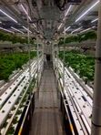 Image of hydroponic operation with plants on trays