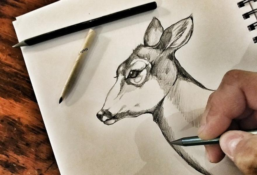 hand drawing an animal in a sketchbook with pencil