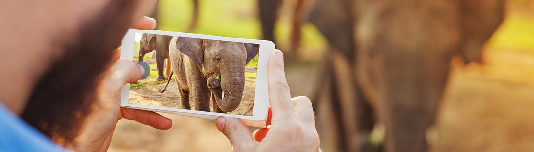 A closeup view of a person using a mobile phone to take a photo of an elephant
