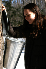 Hanah McFarlane tapping a maple tree for syrup