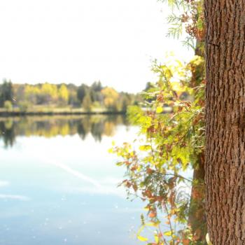 nature shot with tree in foreground and trent river behind
