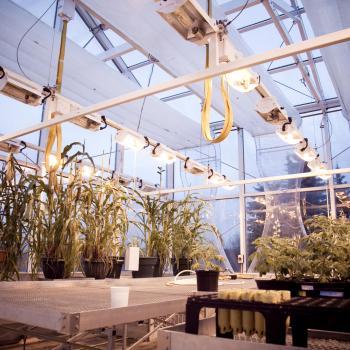 Trent University greenhouse