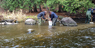 2 female students standing in a river with waders on using a net to pullout river samples into a bucket