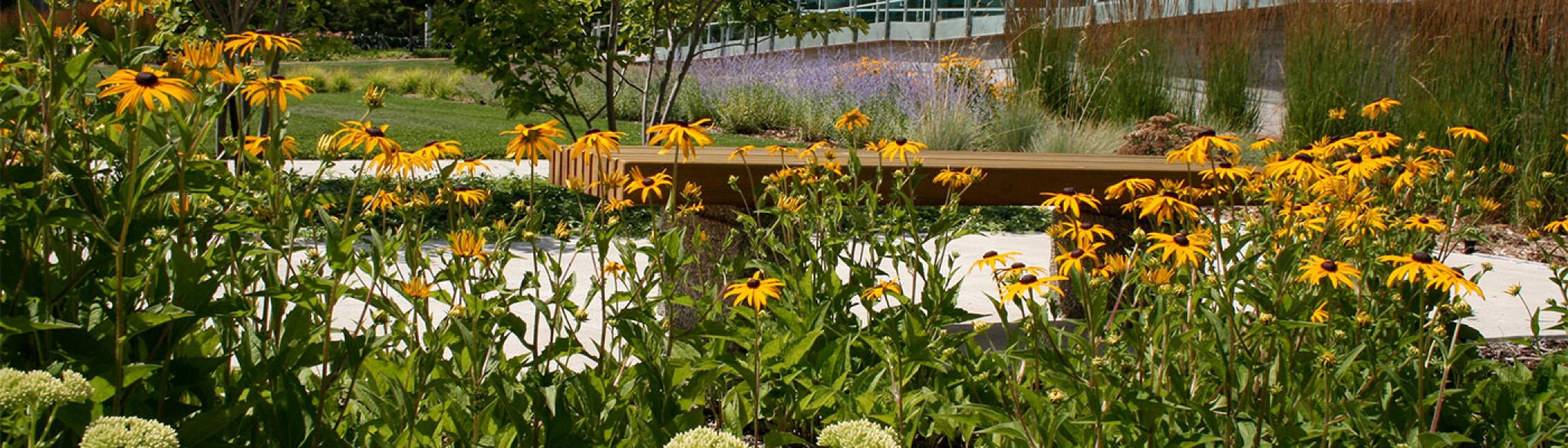 Flowers in bloom during summer months on Trent's Symons Campus