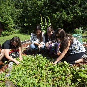 Students looking at plants in the medicine garden