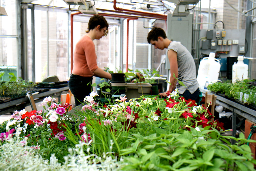 Sustainable Agriculture students working in Trent's greenhouse