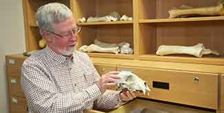 Professor holding an animal skull in front of an anthropology cabinet with bones displayed on it