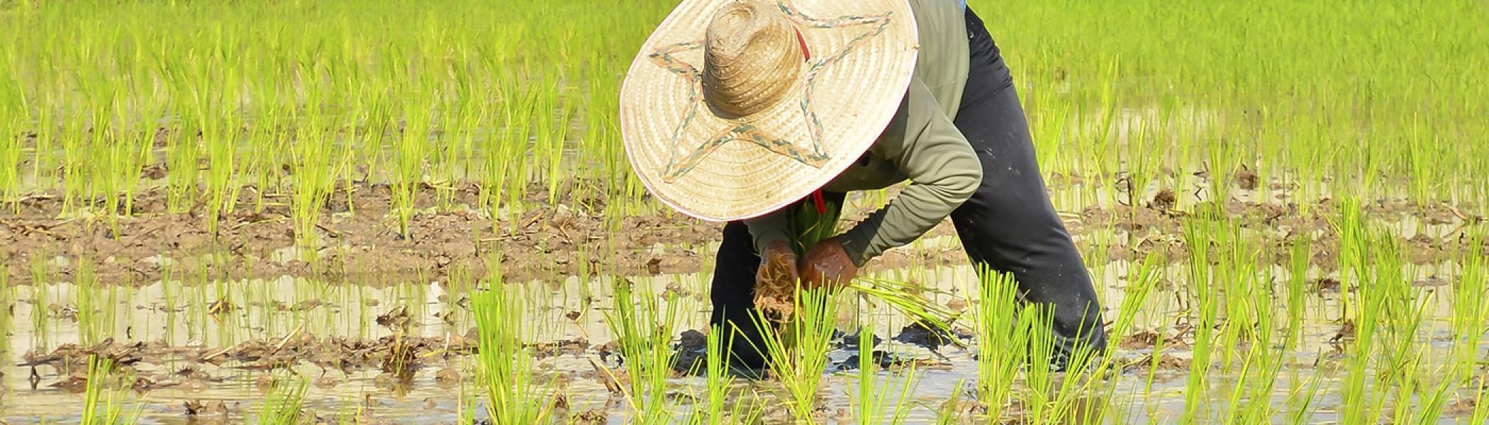 A farmer working in a field.