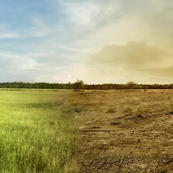 A landscape image of a green healthy field merged in the centre with a dry unhealthy field.