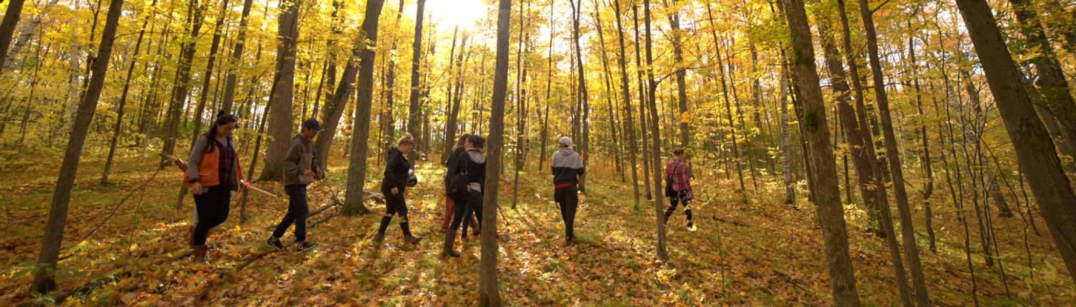 Sustainability M.A. students walking through a forest in the fall