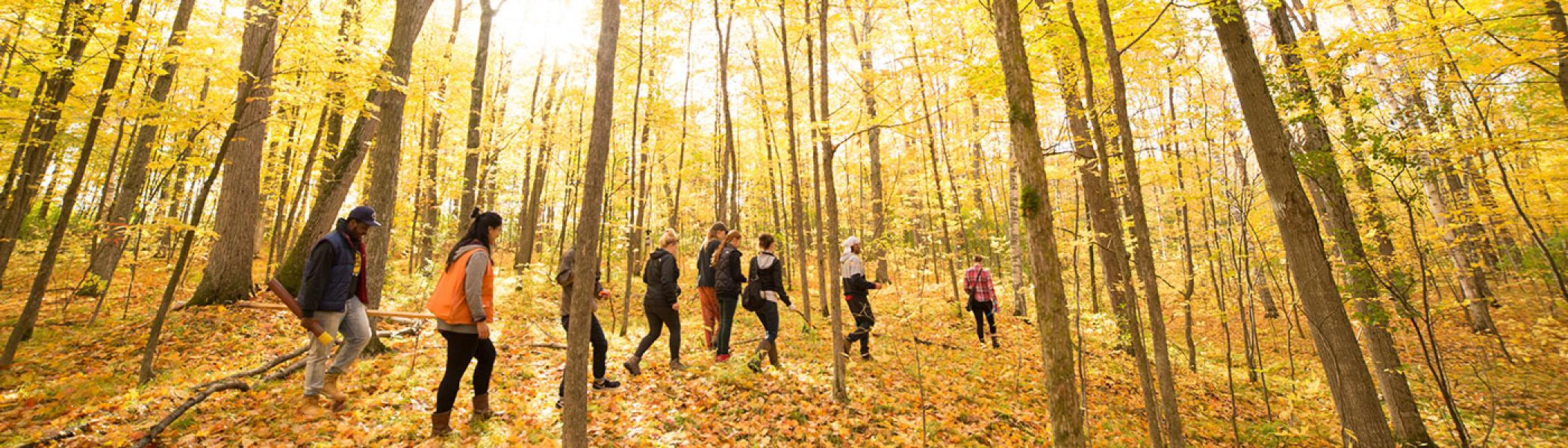 Students walking through the drumlin's woods