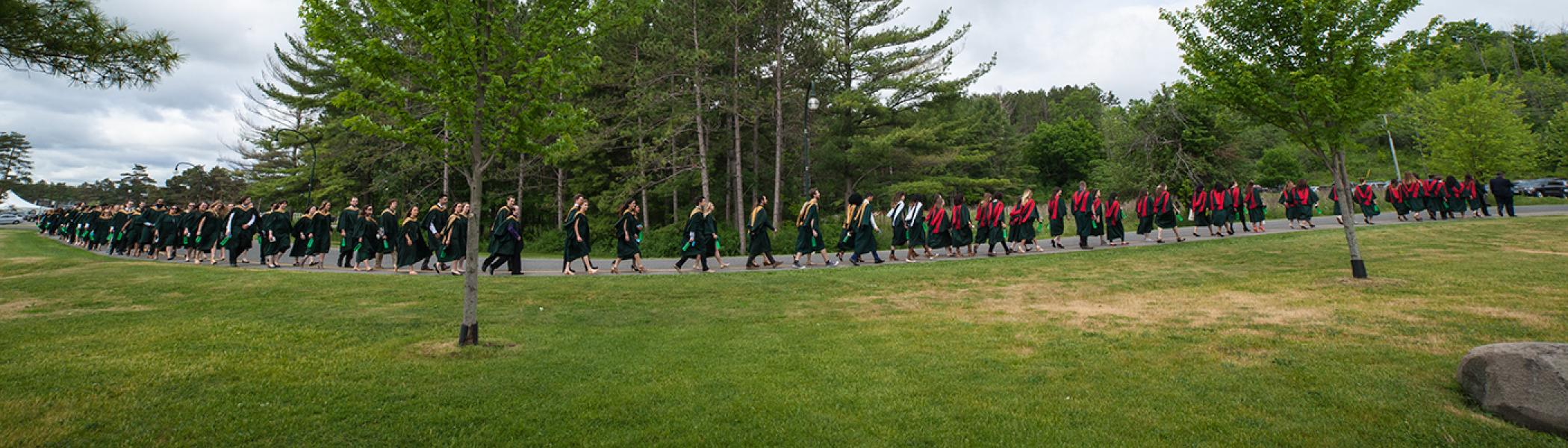 Group of students in convocation gowns walking across a field of grass in front of a row of evergreen trees in the summer sun